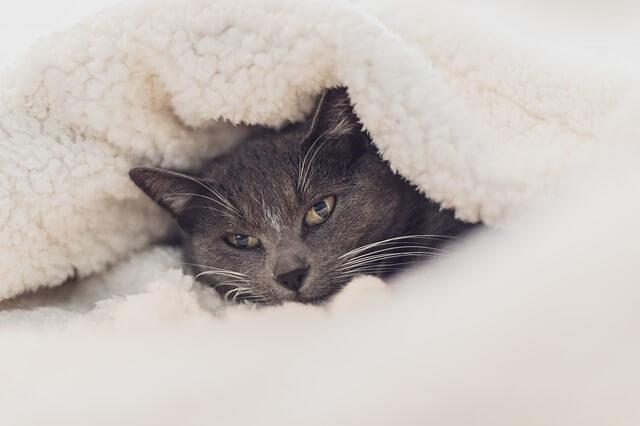 einhorn decken katze