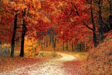 Einhorn Gummistiefel Herbst