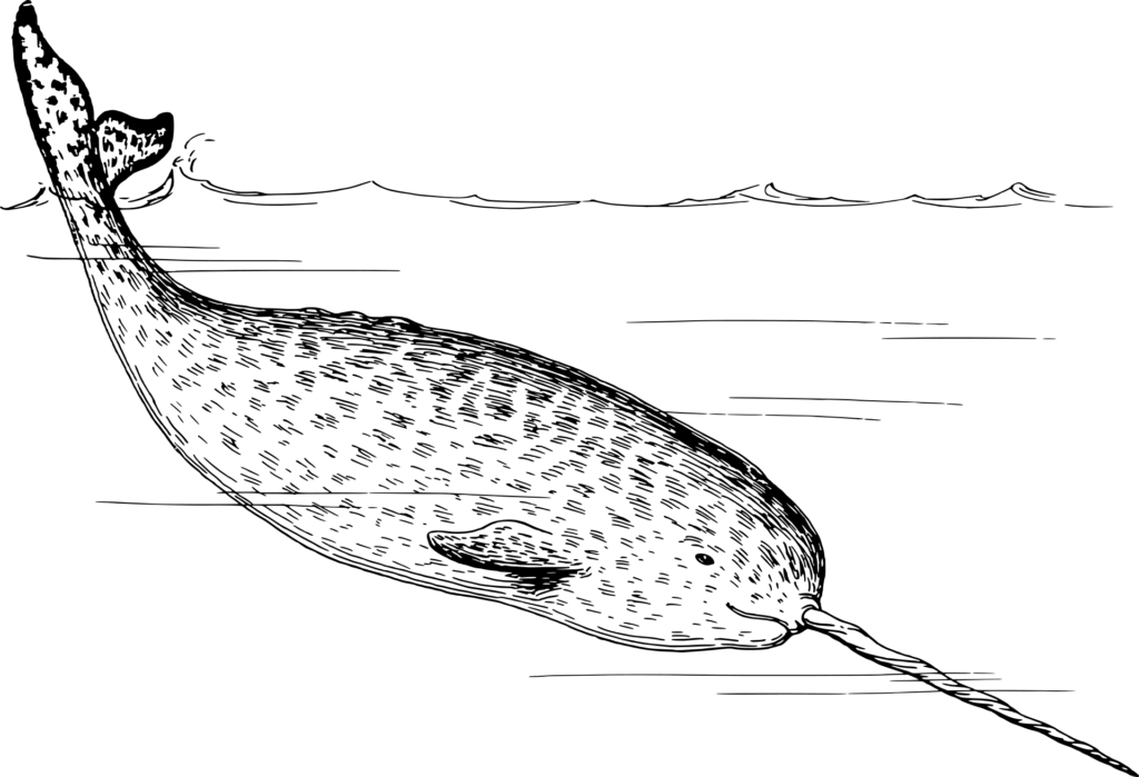 Einhorn Wal Narwal