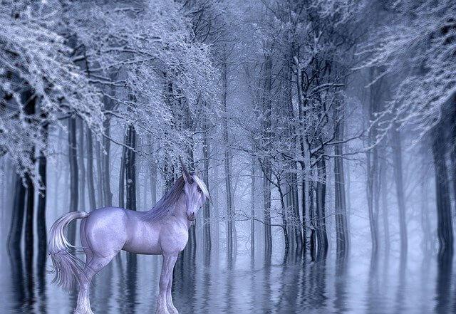 einhorn bilder zauberwald