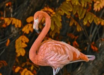 Flamingo Bettwäsche