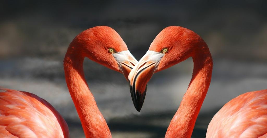 Flamingo Bilder