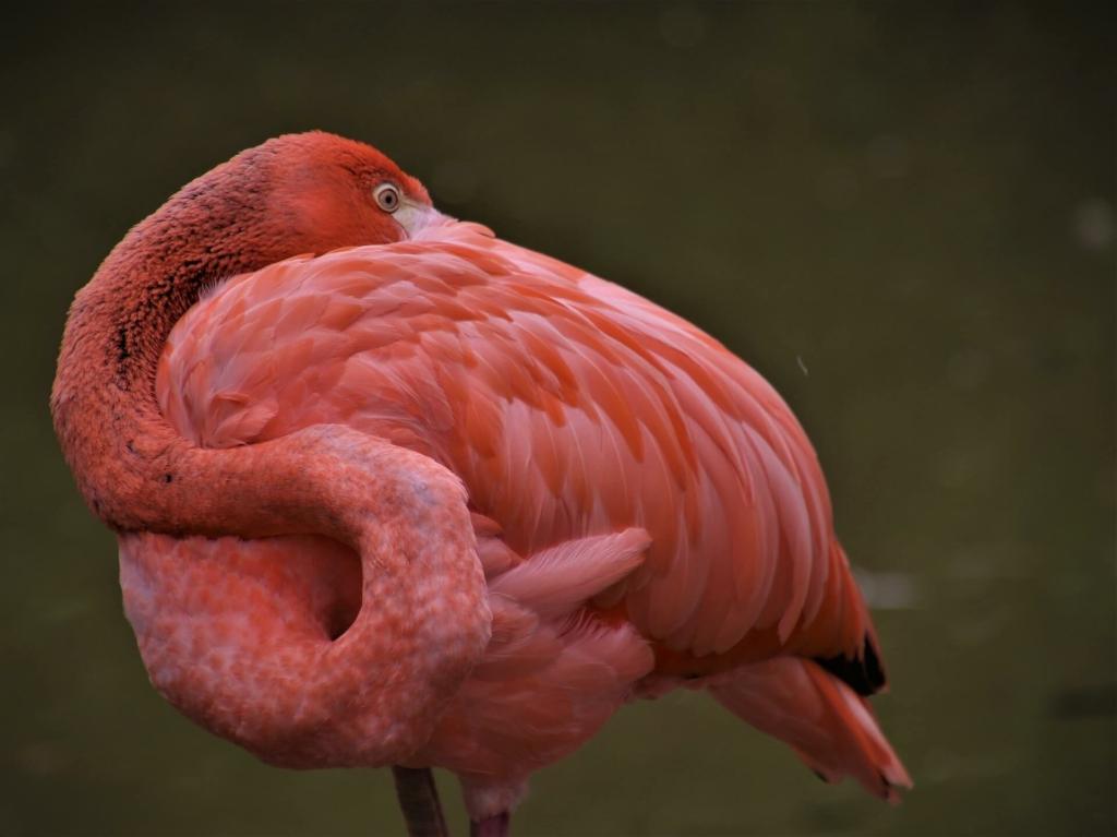Flamingo Deko