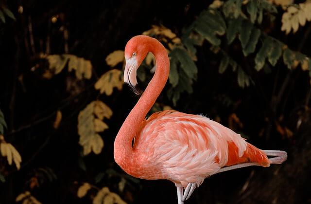 flamingo bilder lebensfroh