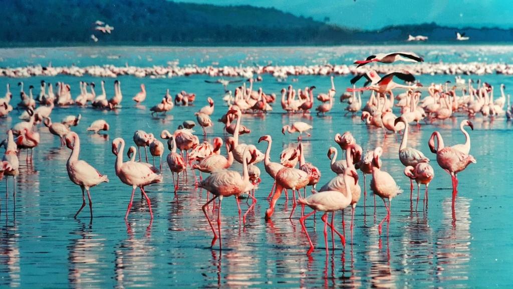 flamingo kostuem