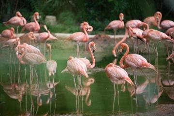 flamingo malen