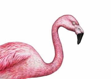 flamingo zeichnen