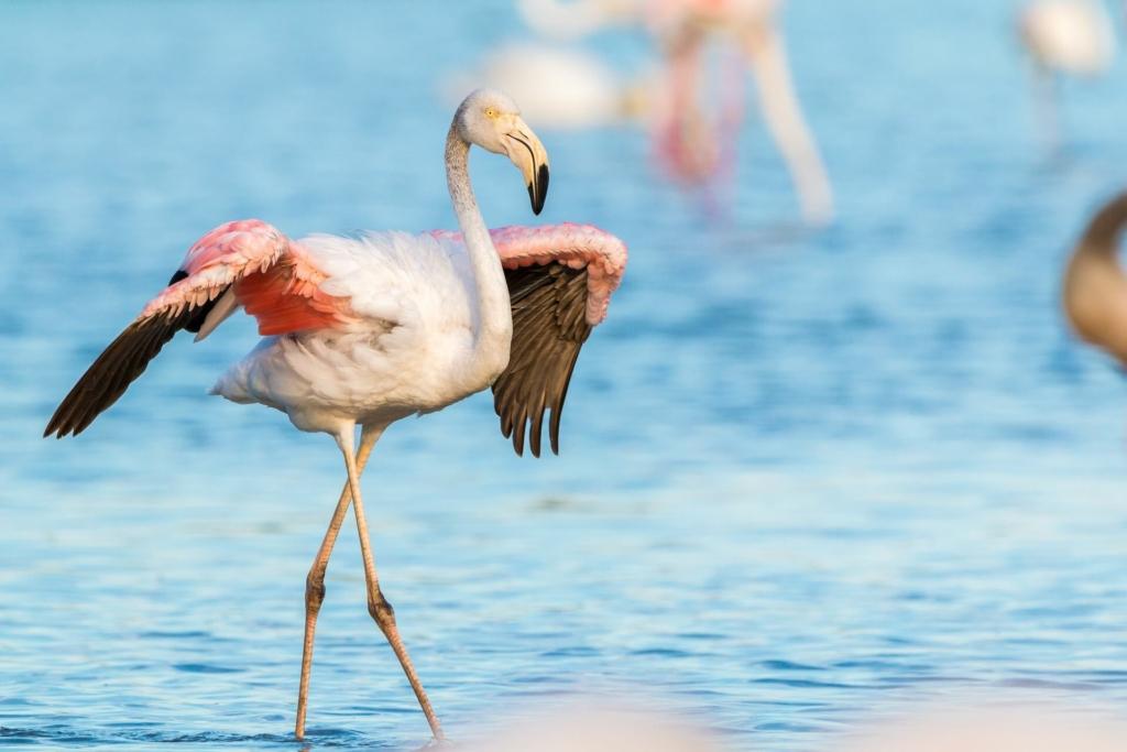 Flamingo Sommer
